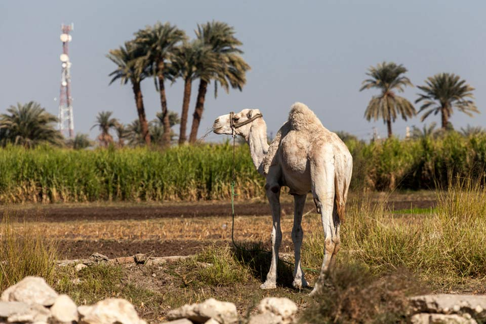 Cairo Day Trips
